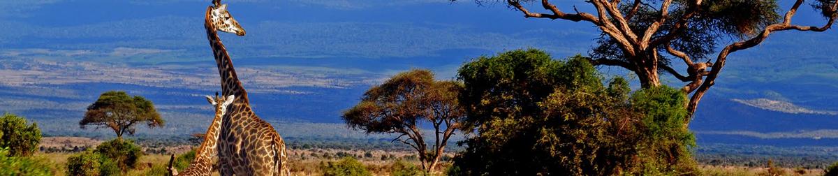 Travel To Nairobi